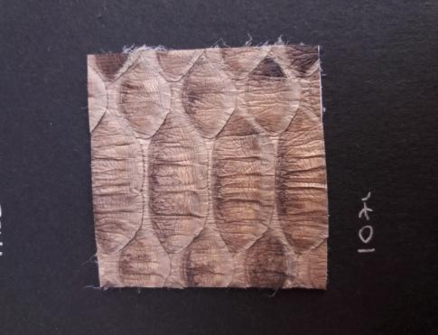 Экзотическая кожа Питон (loti)